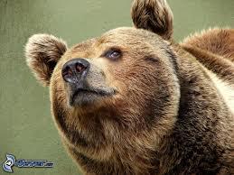 Il letargo dell'orso e la stupidità dell'uomo