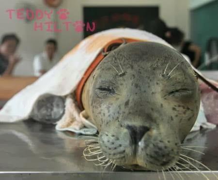 La foca che muore è un brutto segnale