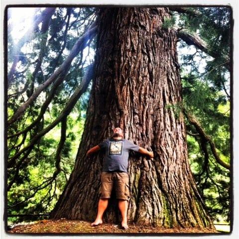 Mai provato ad abbracciare un albero?