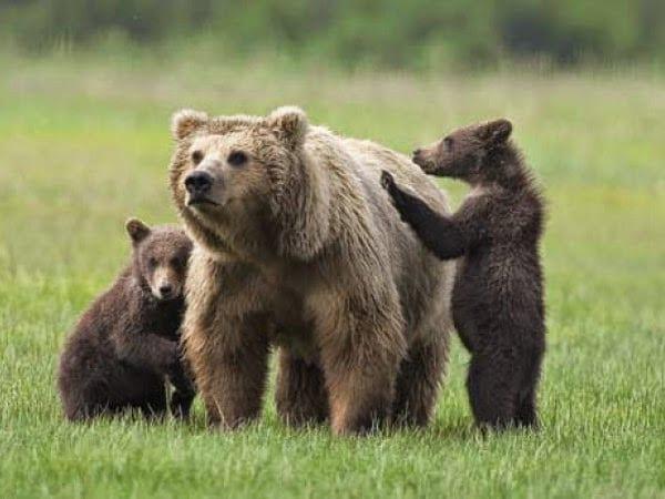 Lombardia bear-friendly