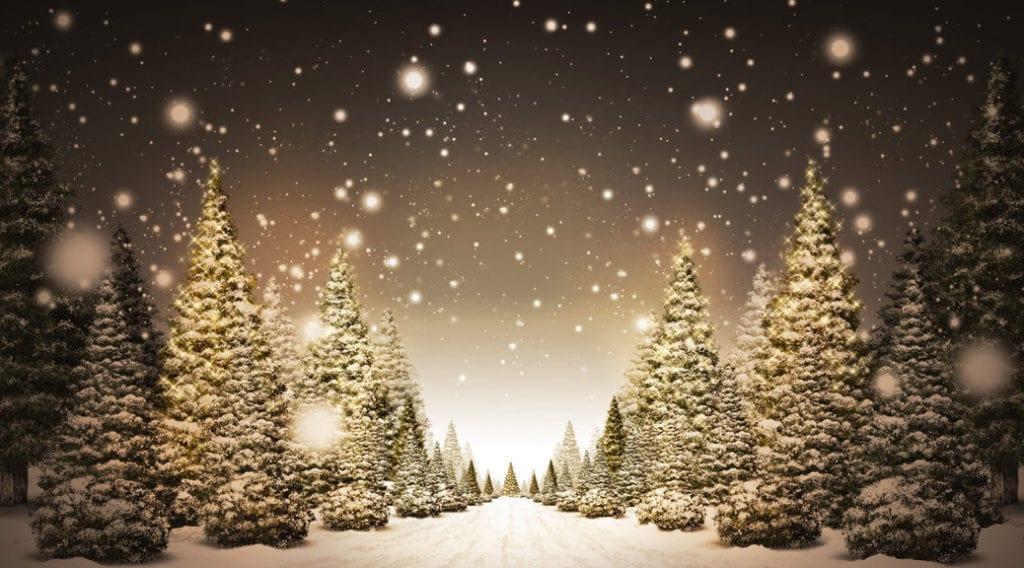 Albero di Natale: il primo regalo fatelo alla Natura