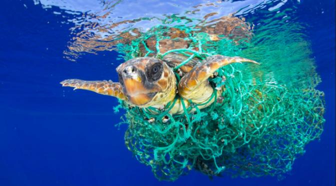 Milioni di euro buttati in un mare di plastica