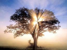 Un giorno per la terra, più alberi, meno sprechi