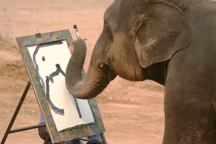Elefanti che disegnano, galleristi cercasi