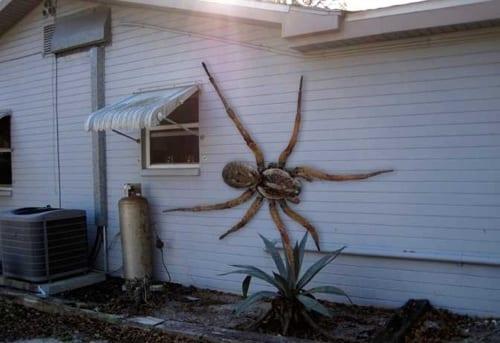 Il ragno che mangia i gatti