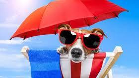 Hai un cane? Portalo in spiaggia