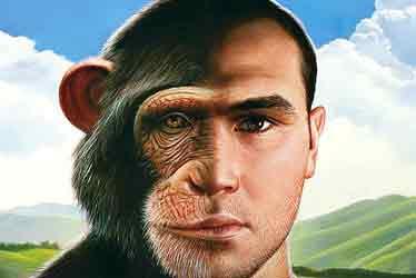 L'orango che è in tutti noi