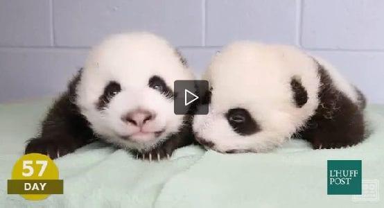 I primi 100 giorni di un panda
