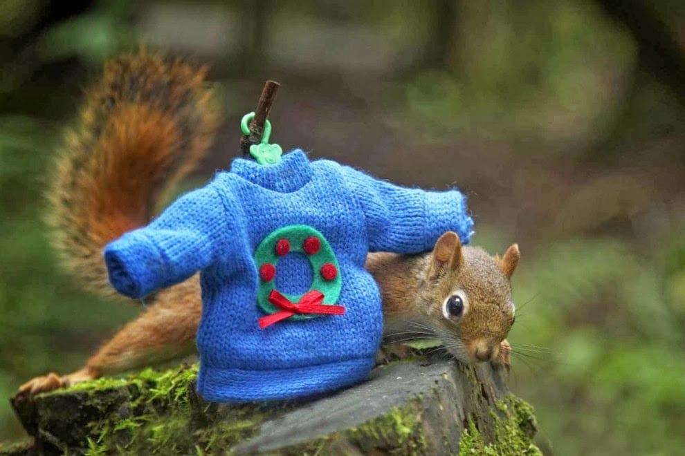 Il Natale degli scoiattoli