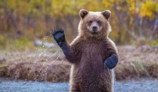 Cronache dalla Terra degli orsi