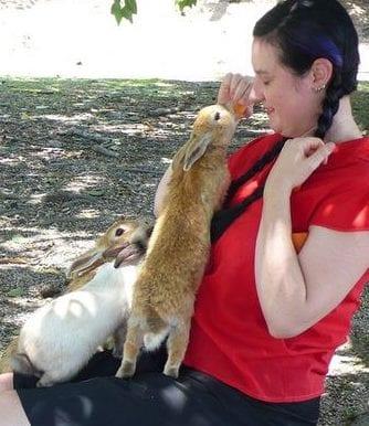 L'isola dei conigli felici