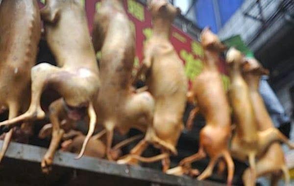 Cani e gatti da mangiare, il video che inchioda i cinesi