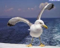Un uccello che mette paura in città