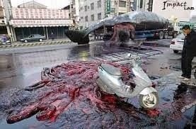 Il paradosso della balena che esplode