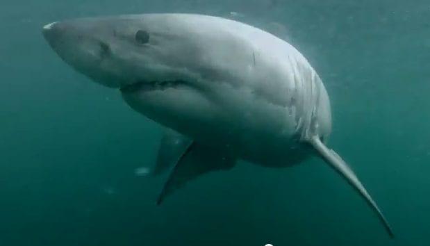 Be a sandwich, il tuffo con lo squalo che ti aspetta