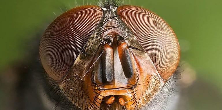 Il mondo con gli occhi di chi guarda le mosche